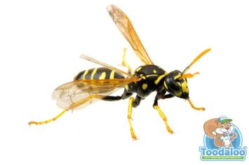 Steinbach Wasp Removal