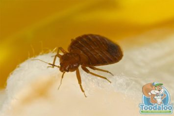 Toronto Bed Bug Removal