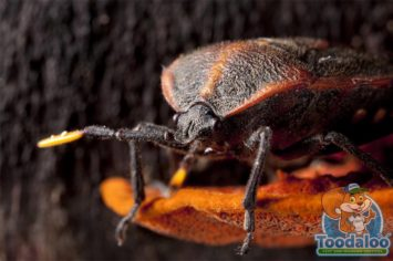 Steinbach Bed Bug Removal