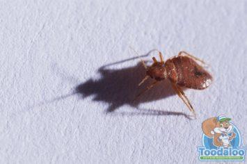 Edmonton Bed Bug Removal