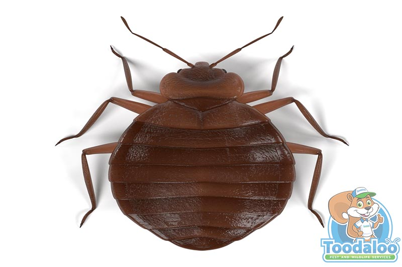 Calgary Bed Bug Removal