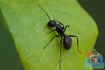 barrie carpenter ant removal