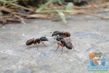 Regina Carpenter Ant Removal