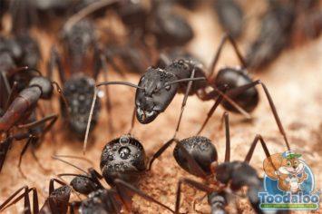 Ottawa Carpenter Ant Removal