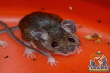 Steinbach Mouse Removal
