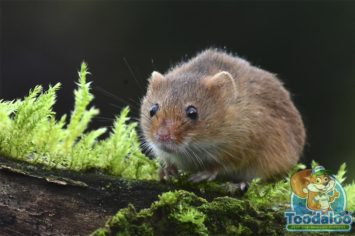 Red Deer Mouse Removal