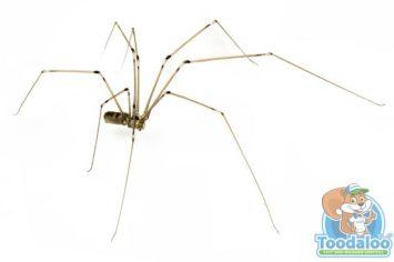 Steinbach Spider Removal