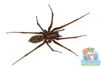 Prince Albert Spider Removal
