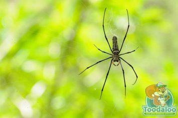 Red Deer Spider Removal