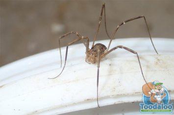 Winnipeg Spider Removal