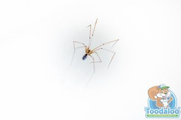 Penticton Spider Removal