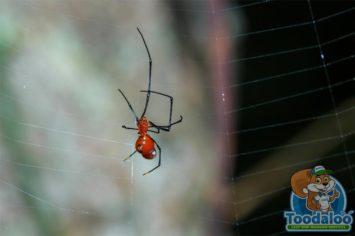 Victoria Spider Removal