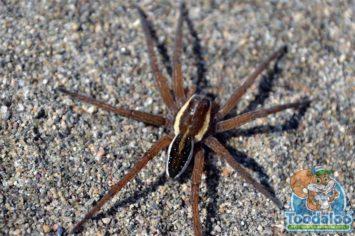 Kelowna Spider Removal