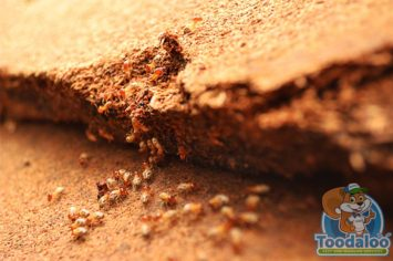 Victoria Termite Extermination