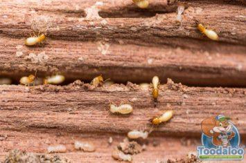 Regina Termite Extermination