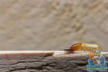 Ottawa Termite Extermination