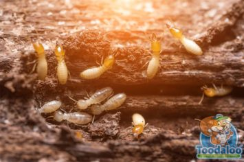 Edmonton Termite Extermination