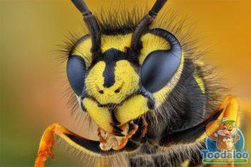 Okanagan wasp removal