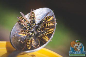 Calgary Wasp Removal