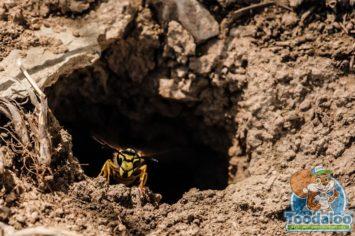Ottawa Wasp Removal
