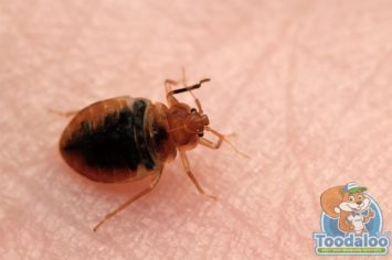 Mississauga Bed Bug Removal