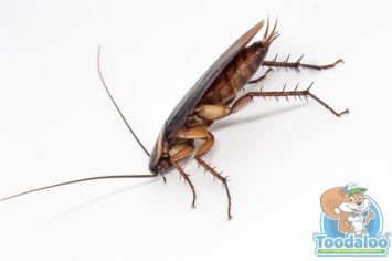Red Deer Cockroach Removal