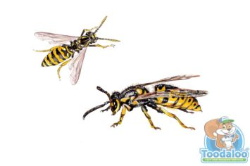 Red Deer Wasp Removal