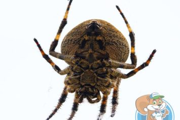 oakville spider removal