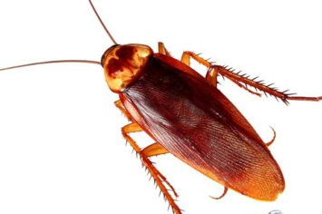 thompson cockroach removal