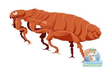 thompson flea removal