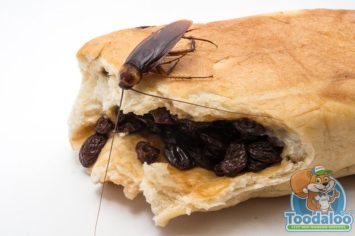 kitchener Cockroach Removal