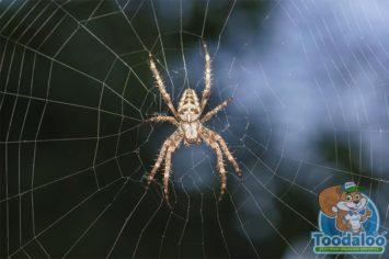 kitchener spider removal