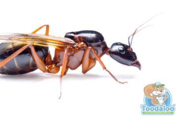 portage la prairie Carpenter Ant Removal