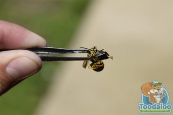 portage la prairie wasp Removal