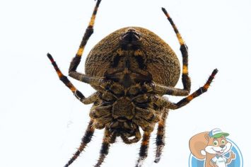 airdrie spider removal