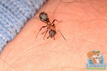 sherwood park carpenter ant removal