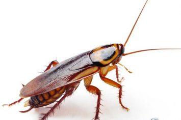 sherwood park cockroach removal