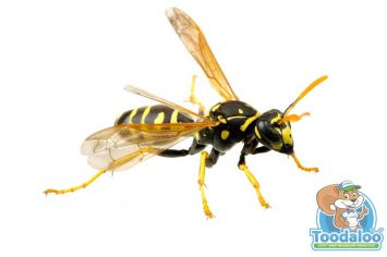st albert wasp removal