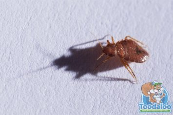 surrey bed bug removal