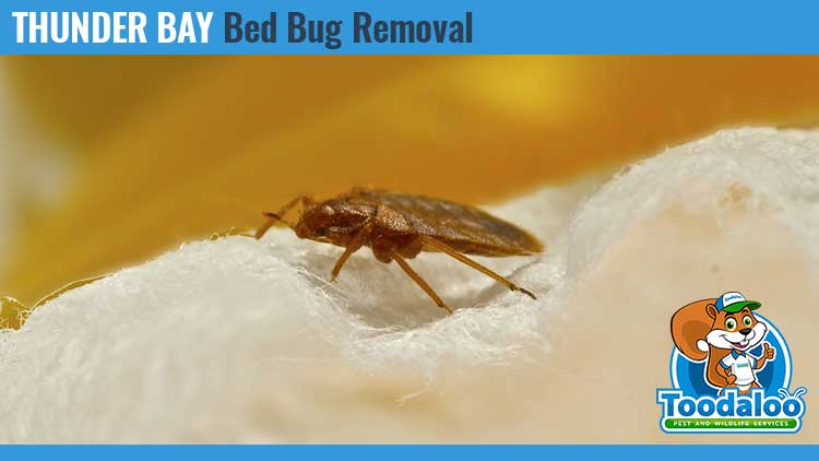 thunder bay bed bug removal