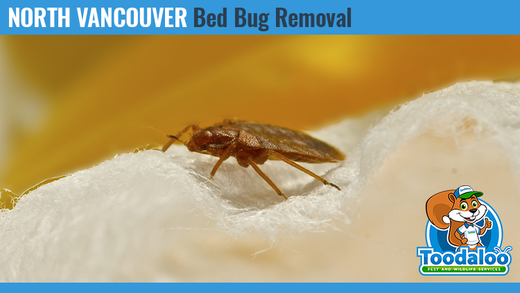 north vancouver bed bug removal