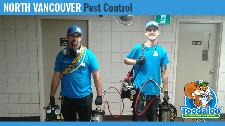 north vancouver pest control