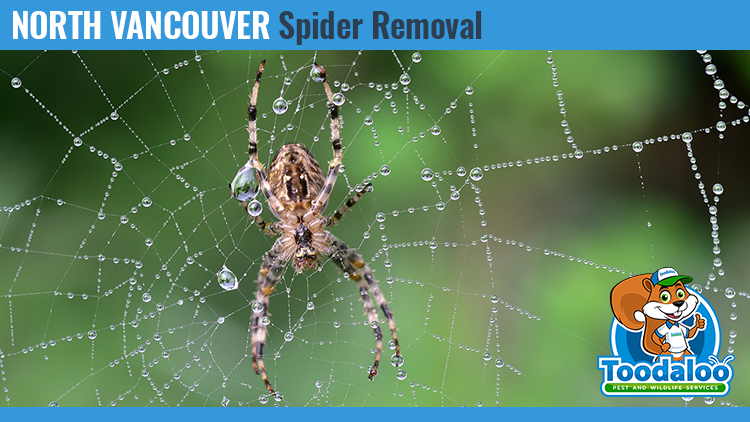 north vancouver spider removal