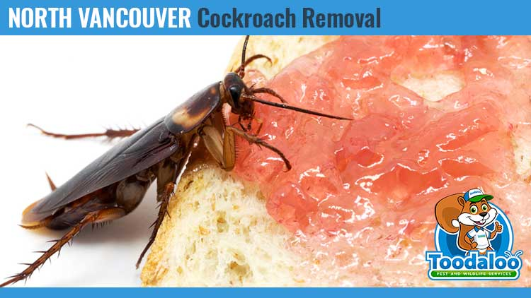 north vancouver cockroach removal