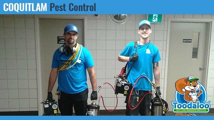 coquitlam pest control
