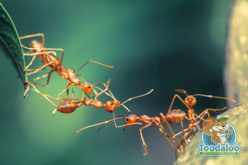 Contending With Carpenter Ants