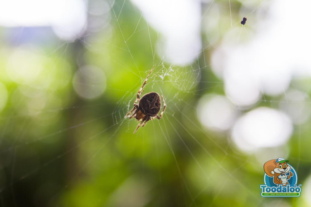 Shutting The Door on Spiders
