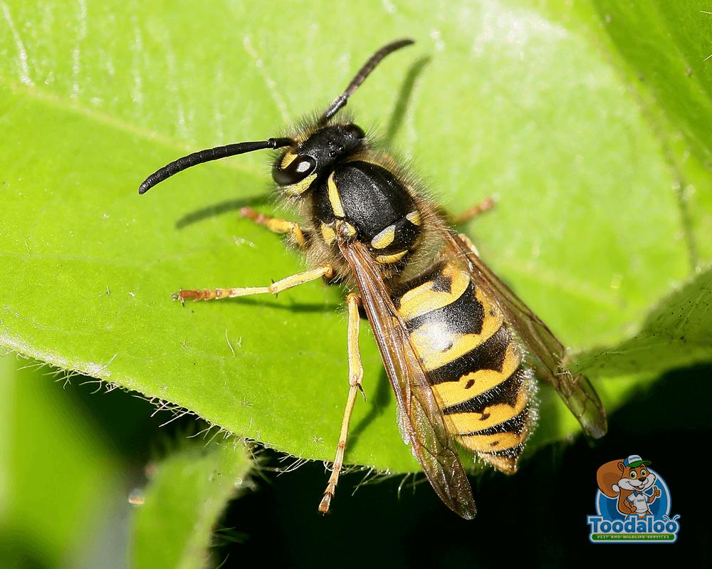 Warding Off Wasps