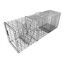 Raccoon Traps