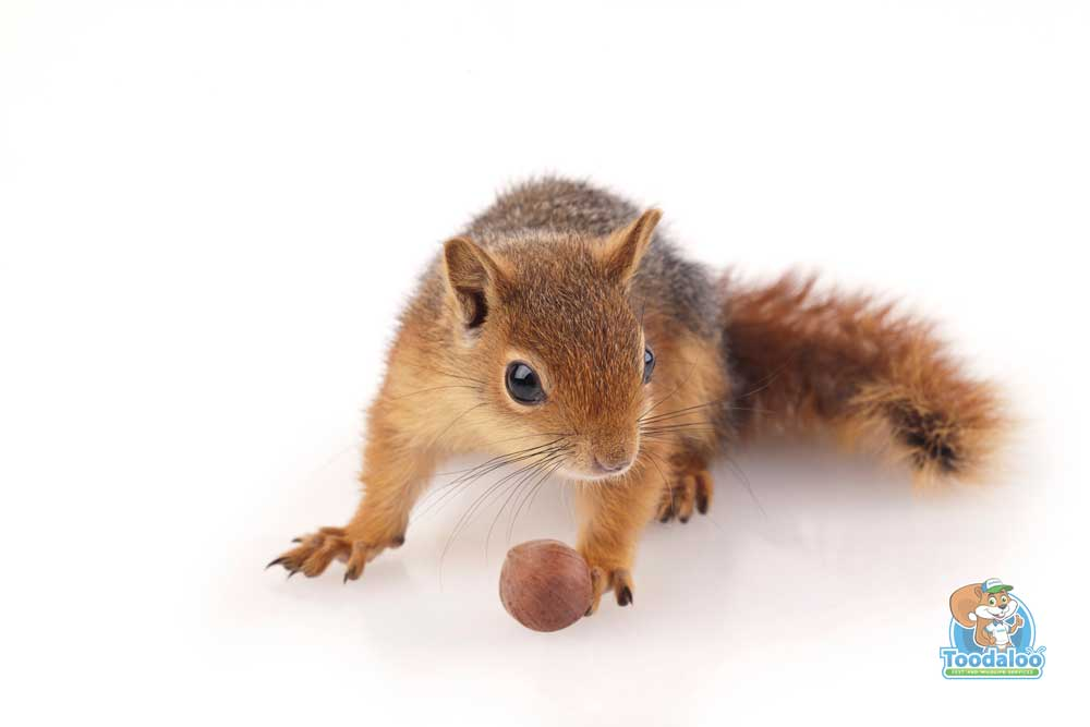 What Keeps Squirrels Scurrying?